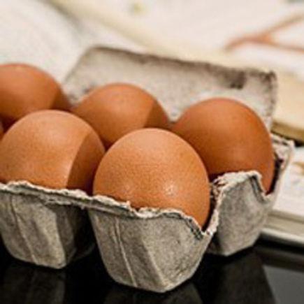 Undervisningsplan Fødevaregruppen æg og bærerdygtighed og miljø