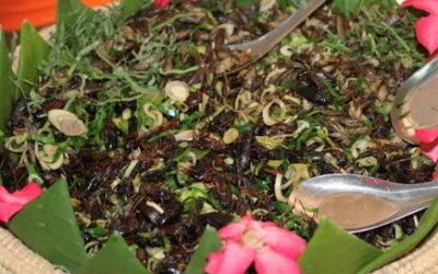 Insekter – de seksbenede husdyr er på vej