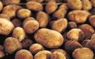 Historien om kartoflen