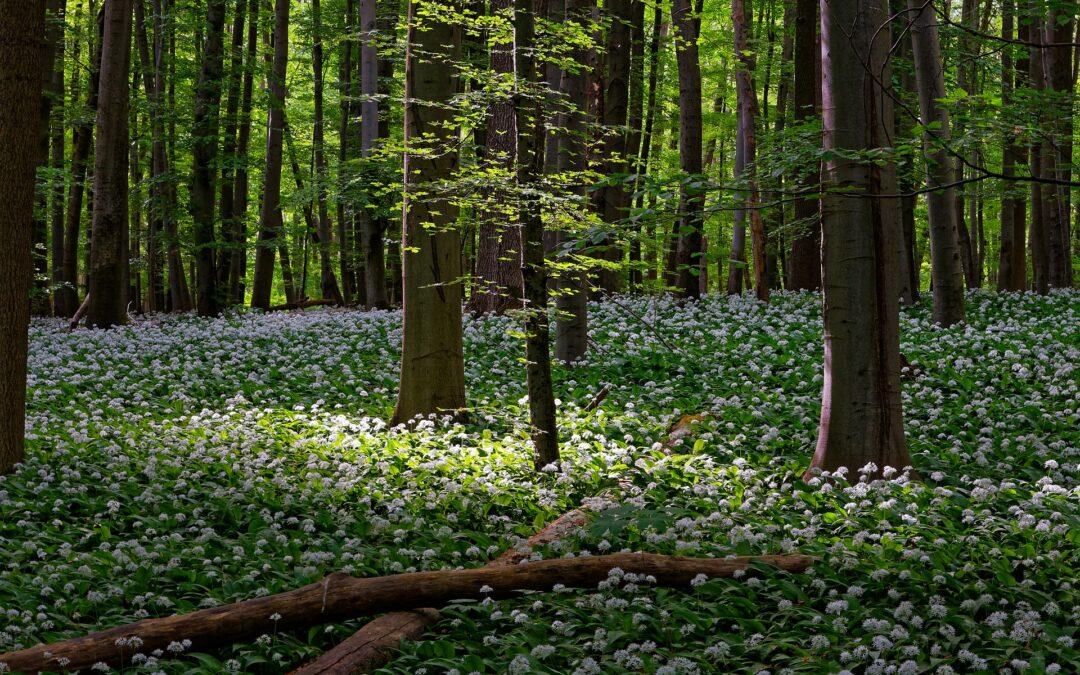 Mad fra skoven